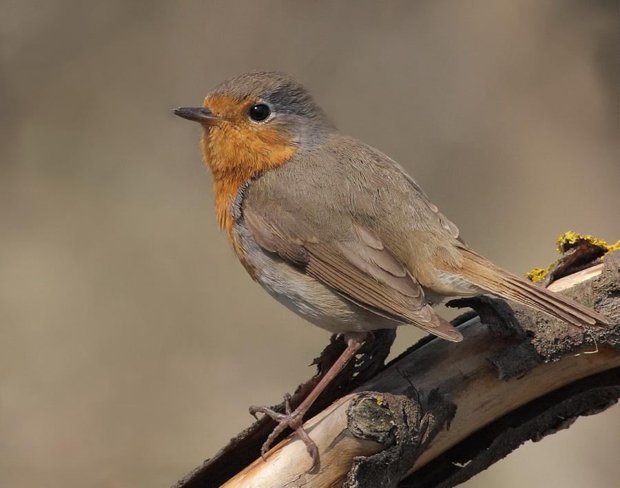 самые фото и название птиц в украине может быть