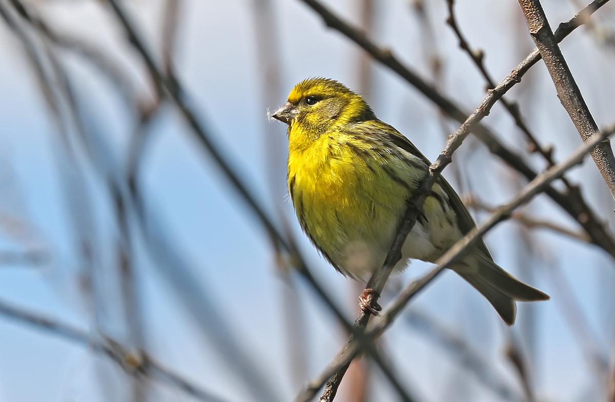 певчие птицы украины фото фильмография михалковой пополнилась