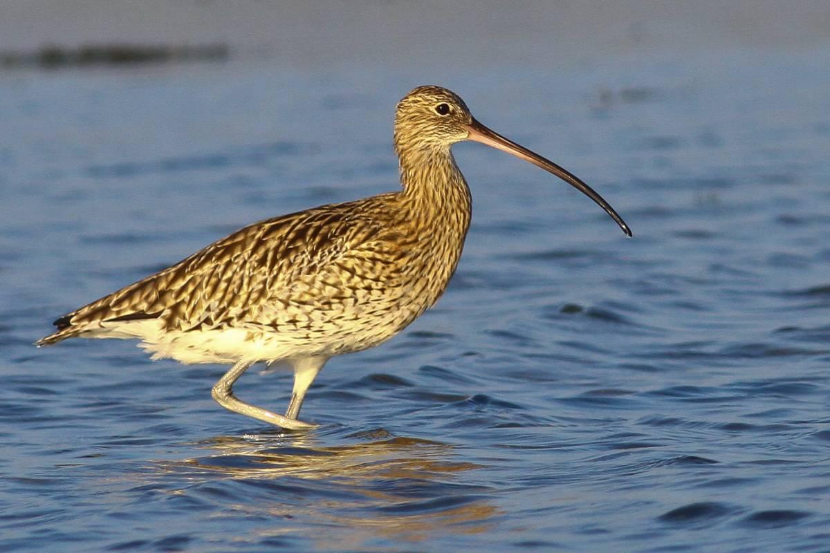 фото и названия птиц с длинным клювом