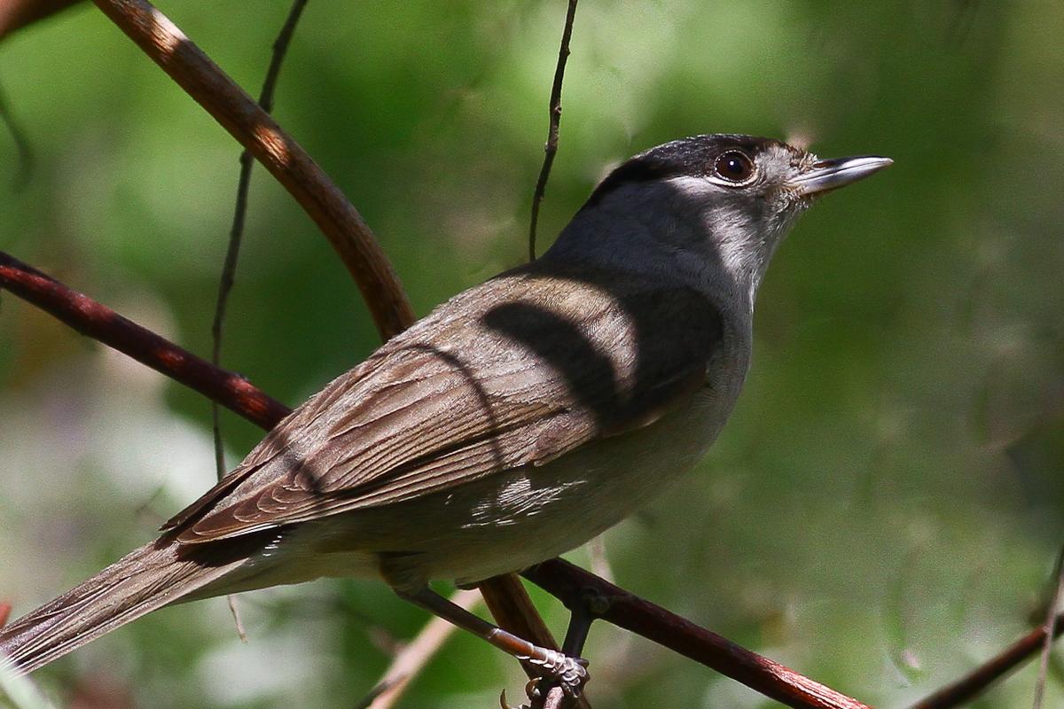 Фото птиц на черном фоне большей степени