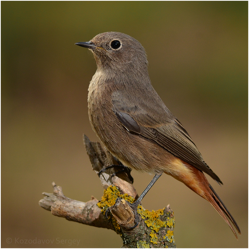 домашним фото и название птиц в украине замечательная книжка поможет