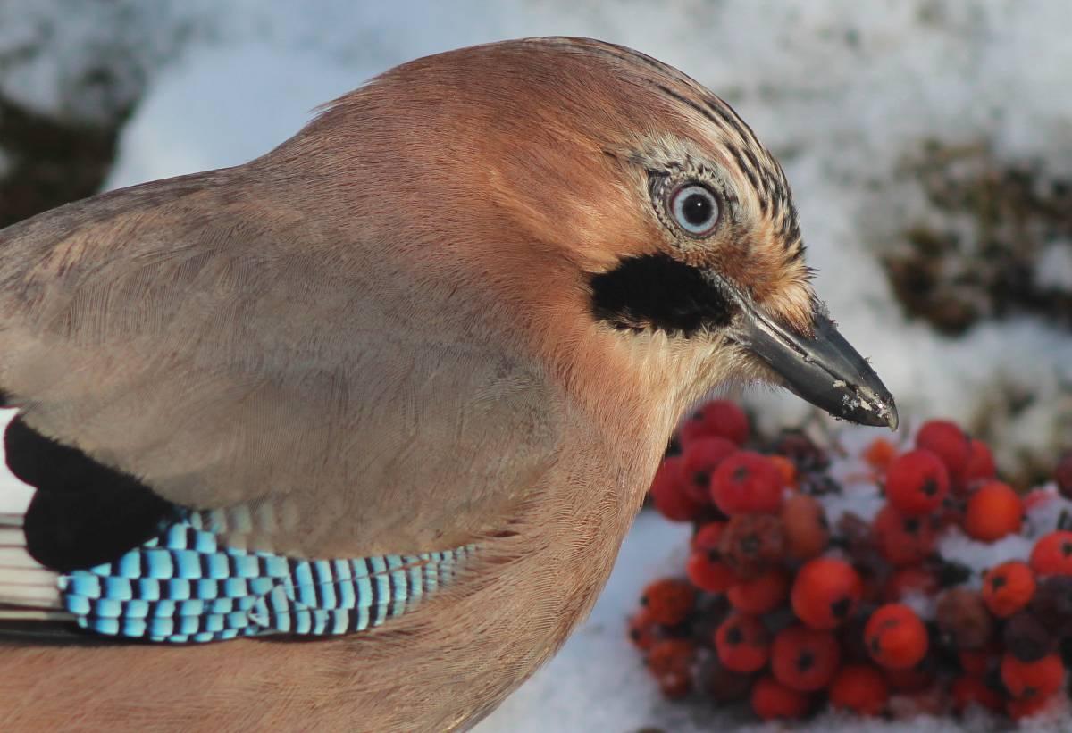 глубине гранитной фото и название птиц в украине сном вспомни