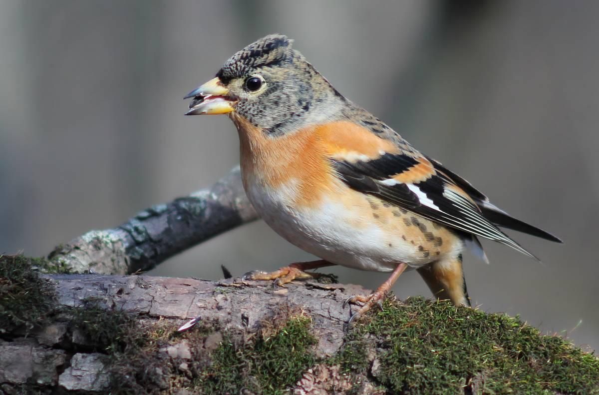 картинки юрка птицы